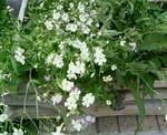 flower0707.jpg